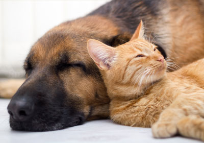 cat and dog asleep on bed