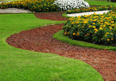 garden pathway with yellow and white flowers