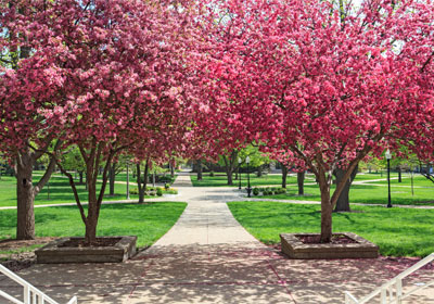 8 Awesome Trees for Kansas City Yards