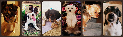 The above dogs are from left to right we have: Sasha - Katie Stephans dog, Tripp - Christina Komonce's Dog, Bojangles - Julie Hirt's Dog, Henry - Chelsea Fanders Dog, Callie - Lesa Watsons Dog, and Millie - Rhonda Haskin's Dog