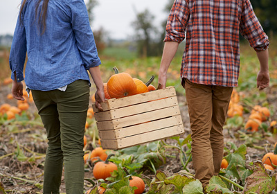 Enjoy Fall at the Local Pumpkin Patch