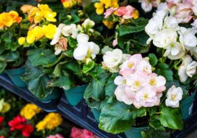 Tips for taking home a quality plant from the store